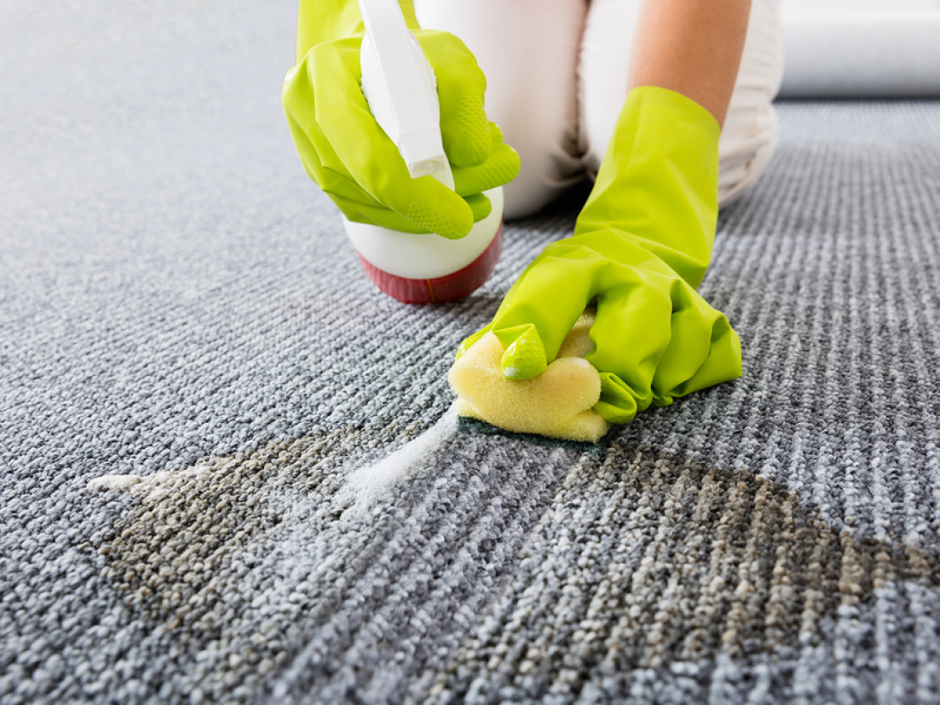 Stain Removal Carpet Cleaning Lutz Amp Wesley Chapel Fl